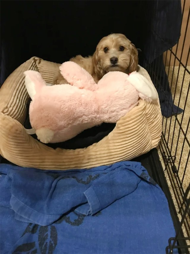 pets with their favorite toys stuffed bunny