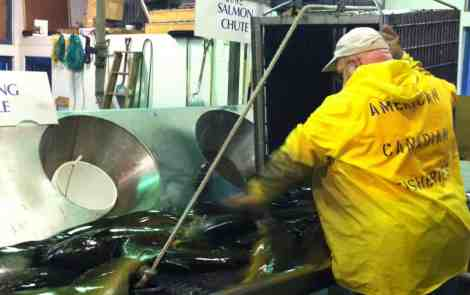 Great Lakes, Great Times: Fish Hatcheries