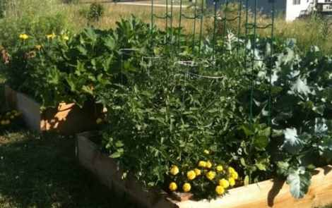 Plan Your Canning Garden