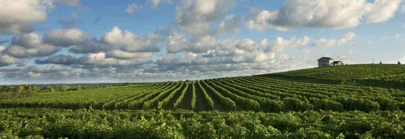 Exploring Southwest Michigan Wine Country