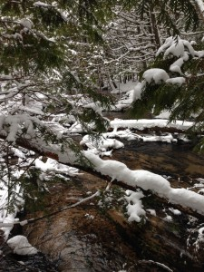 Explore other areas of the VASA Trail during the Suds and Snow event. Photo Courtesy of Jennifer Hamilton
