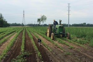 Grandpa Minard Visser tending to the fields, Photo Courtesy of Visser Farms