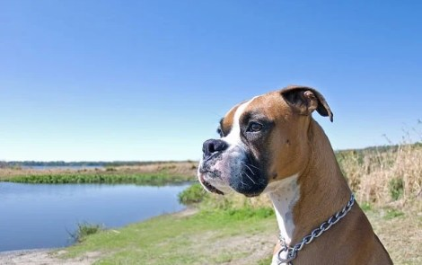Cheap, Dog-Friendly Activities In Metro Detroit