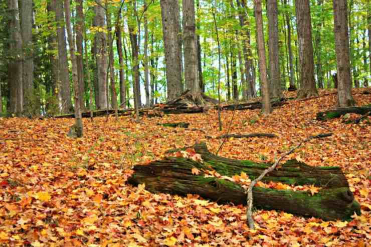 4 Michigan Drives to Make the Most of Fall - The Awesome Mitten