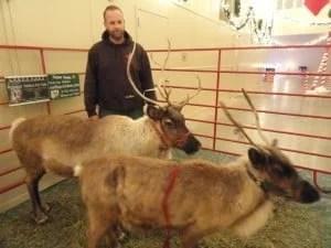 Live Reindeer at Nite Lites Jackson