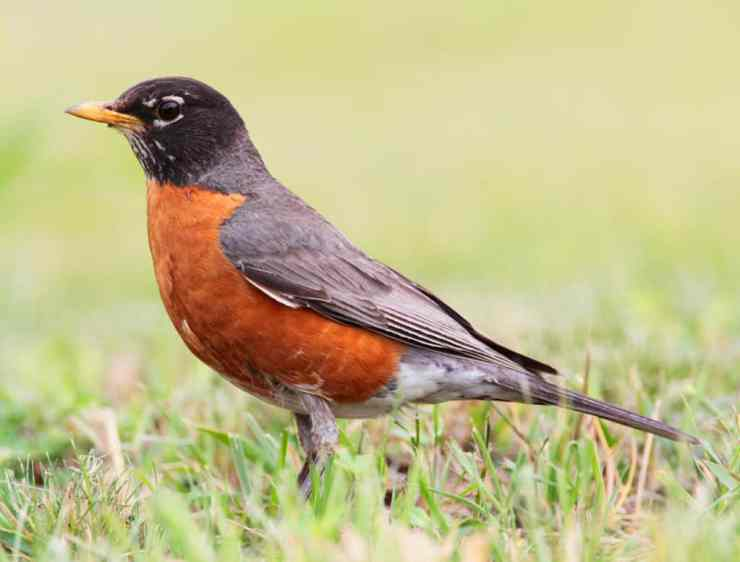 Celebrate Michigan's Feathered Friends On Go Birding Day - The Awesome Mitten