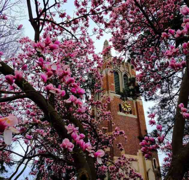 Beaumont Tower at Michigan State University. Photo courtesy of ksteppy Instagram - The Awesome Mitten