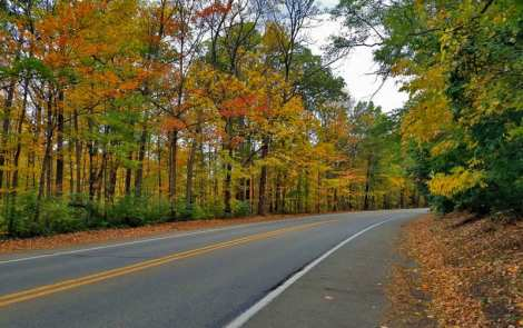 Head Out On A Fall Color Tour In Metro Detroit