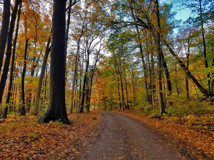 Head Out On A Fall Color Tour In Metro Detroit - The Awesome Mitten