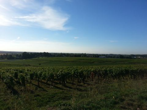 Driving through wine country on our way from Dijon in France