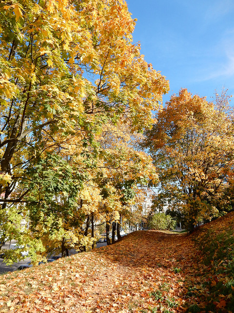 Fall leaves in Vilnius, Lithuania