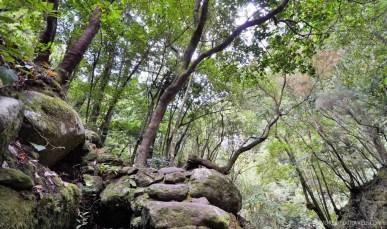 Laurisilva forest, La Palma