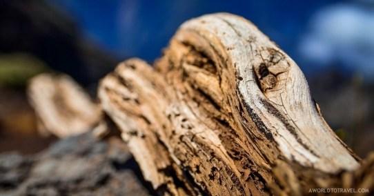 A dead piece of wood near Roque de los Muchachos, La Palma.