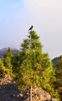 La Palma - Canary Islands- A World to Travel-74