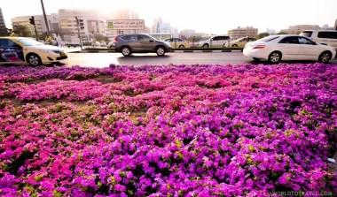 Experiencing Dubai - A World to Travel-133