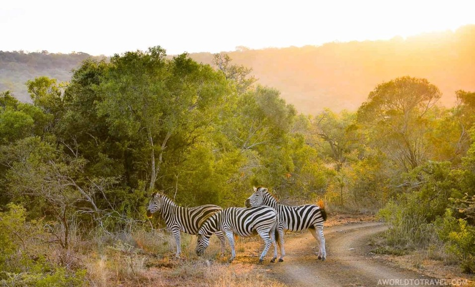 Phinda Private Game Reserve - South Africa - A World to Travel (78)