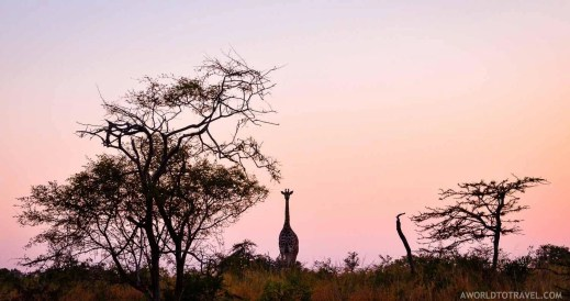 Phinda Private Game Reserve - South Africa - A World to Travel (92)