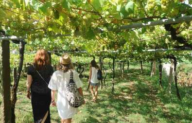 Albarino Vineyards Rias Baixas - Reasons That Will Make You Visit Galicia Soon - A World to Travel