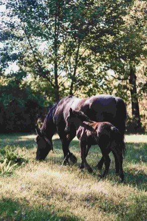 Black Horses - Visit Covasna County A Stunning Land of Mansions in the Romanian Transylvania - A World to Travel