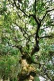 Carballeira de San Xusto - San Xurxo Cotobade - Terras de Pontevedra - A World to Travel (2)