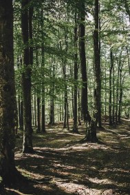 Forest - Visit Covasna County A Stunning Land of Mansions in the Romanian Transylvania - A World to Travel