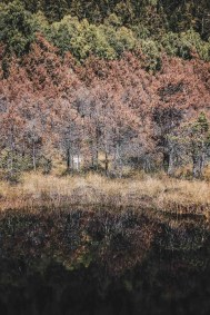 Lake reflections fall - Visit Covasna County A Stunning Land of Mansions in the Romanian Transylvania - A World to Travel