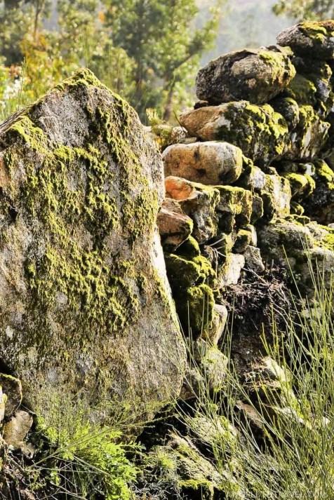 Moss - Vale de Cambra - Montanhas Magicas Road Trip - Portugal - A World to Travel