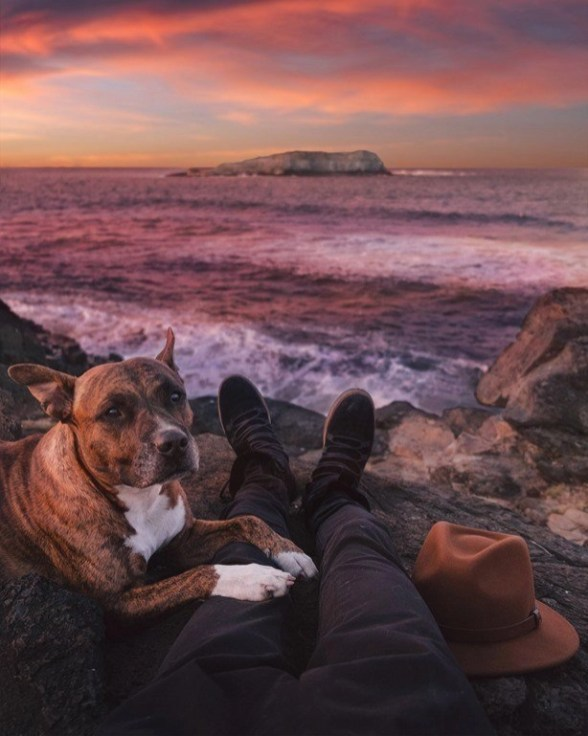 What You Need to Know About Getting an ESA - Emotional Support Animal Letter - A World to Travel (7)