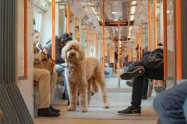 What You Need to Know About Getting an ESA - Emotional Support Animal Letter - A World to Travel (8)