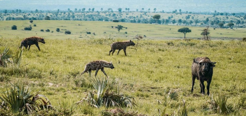 Murchison Falls National Park - Lolim - Best National Parks And Uganda Safaris - A World to Travel