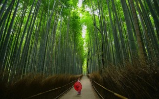 Useful Tips For Planning A Trip To Japan - A World to Travel (12)