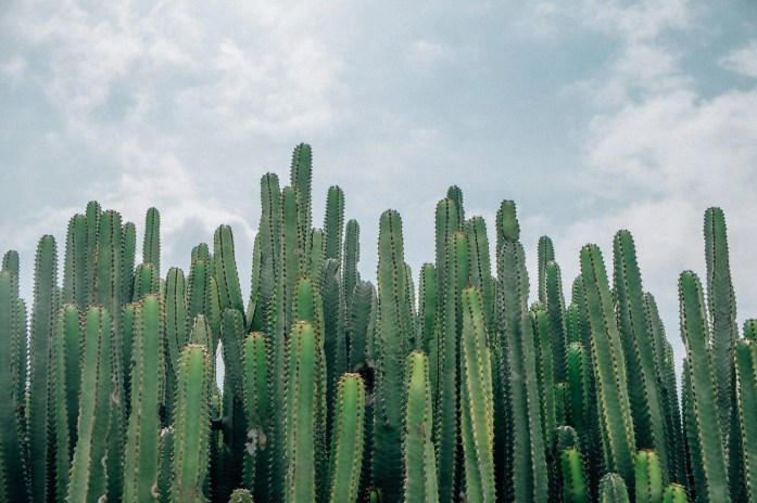 Mexican garden - Inspiring Ideas For Lovely Travel-Themed Gardens - A World to Travel (3)