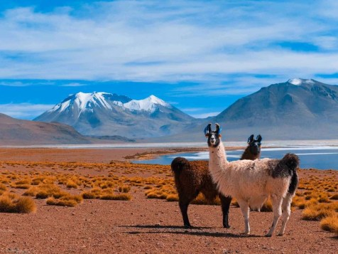 Eduardo Avaroa National Park lake campsite - Best Things to Do in Bolivia - A World to Travel