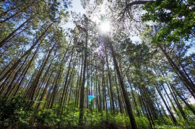 Galicia eucalipto forest - A World to Travel