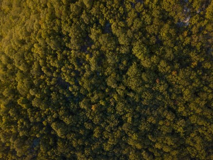 Forest from above - best places to visit in the fall east coast - A World to Travel