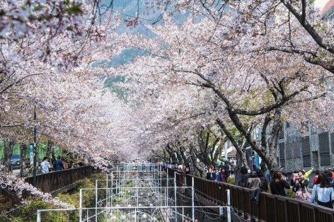 Jinhae - South Korea places to visit - A World to Travel