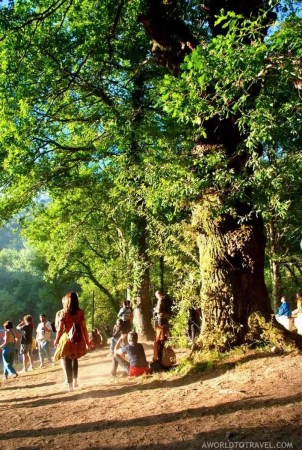 That sweet afternoon light (1) - Vodafone Paredes de Coura music festival 2019 - A World to Travel
