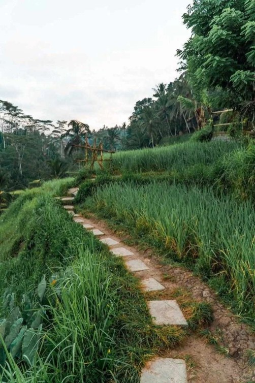 Ubud surroundings - A World to Travel