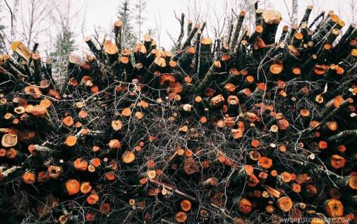 Amata Hiking Trail - Gauja National Park - Autumn in Latvia - A World to Travel (1)