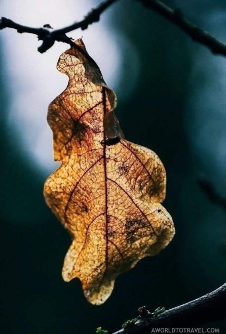 Amata Hiking Trail - Gauja National Park - Autumn in Latvia - A World to Travel (4)
