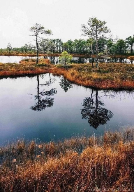 Bog walking in Kemeri National Park - Fun things to do in Latvia - A World to Travel (2)