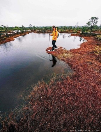 Bog walking in Kemeri National Park - Fun things to do in Latvia - A World to Travel (3)