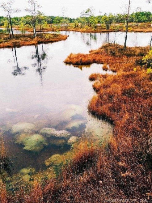 Bog walking in Kemeri National Park - Fun things to do in Latvia - A World to Travel (5)