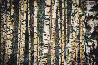 Cecīļi Nature Trail - Gauja National Park - Latvia in Fall - A World to Travel (1)