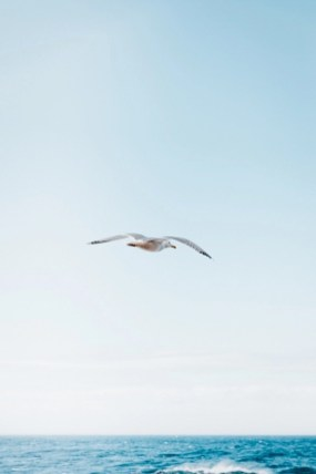 Seagull - Best bird watching destinations in Europe