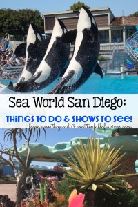 Sea World San Diego: Things To Do & Shows To See!