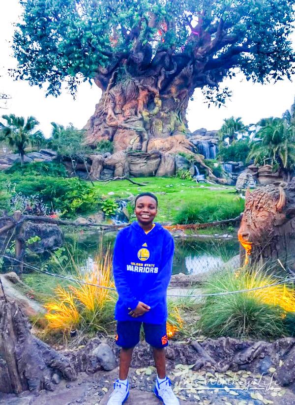 Disney's Animal Kingdom Tree of Life at night
