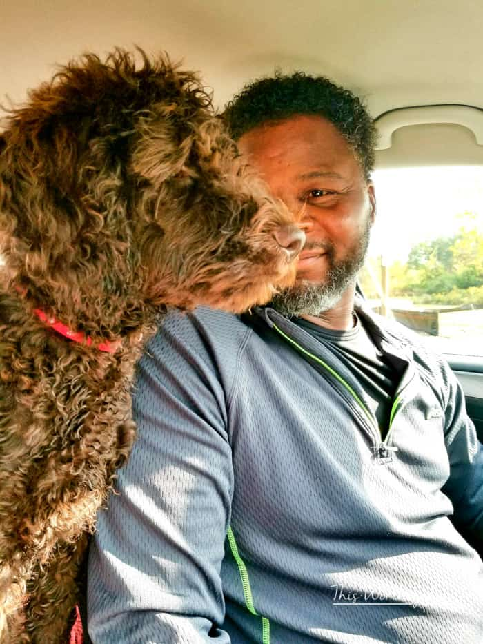 Road Trip Bucket List for Dogs