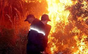 الكشف عن تعويضات المهنيين المتضررين من حرائق الغابات
