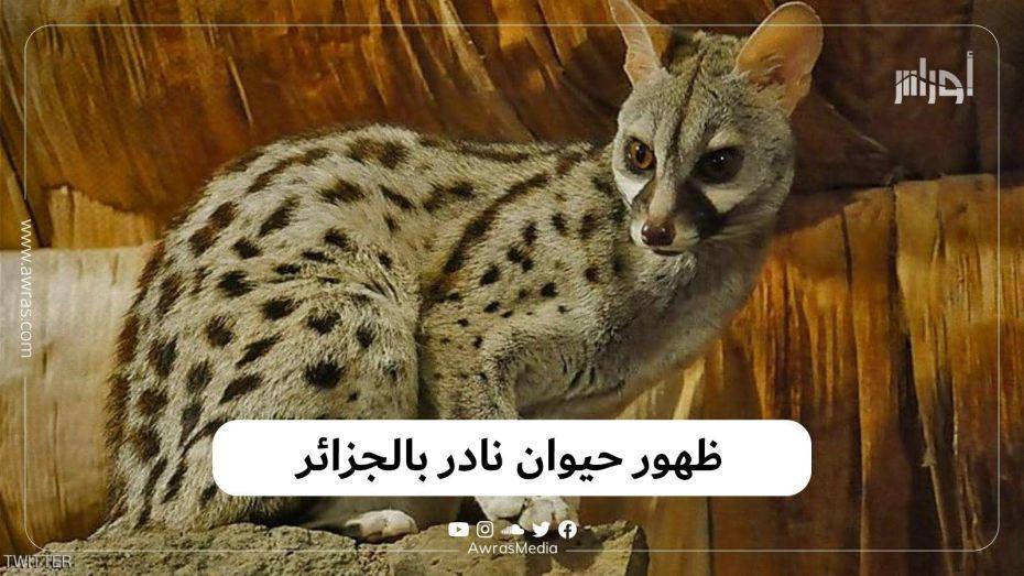 ظهور حيوان نادر بالجزائر